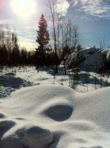 Eräs vantaalainen takapiha helmikuun 27. päivän auringonpaisteessa. Lämpötila +5.