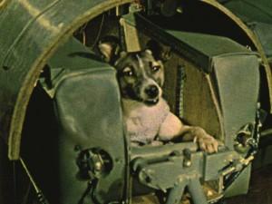 Jopa Sputnik-koira Laika saadaan helposti kurkistamaan myös sään takaa. Kuva:
