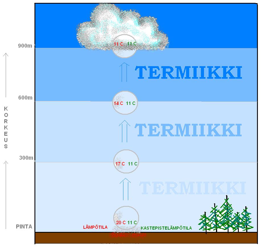 LÄHDE: SÄÄVUOSI 2014:  Kumpupilven synty ja termiikki: Aamupäivän aikana aurinko lämmittää jo tuntuvasti maanpintaa ja samalla aivan maanpinnan lähellä olevaa ilmaa. Erilaiset pinnat lämpenevät eri tavalla. Siellä missä maan pinta ja sen läheinen ilma lämpenevät eniten syntyy ns. termiikkejä. Näissä ympäristöään lämpimämmät ilmakuplat alkavat kohota taivaalle kuumailmapallon tavoin. Aina kun ilmakupla kohoaa 100 metriä ylöspäin se jäähtyy yhden asteen verran. Kohoamista jatkuu niin kauan kuin ilmakupla pysyy ympäristöään lämpimämpänä. Samalla kun kohoava ilmakupla jäuähtyy, sen sisältämän näkymättömän vesihöyryn määrä pysyy muuttumattomana. Tämä tarkoittaa sitä, että kohoavan ilmakuplan Kastepistelämpötila (=Td) pysyy vakiona. Lopulta ilmakuplan lämpötila laskee samaksi kuin ilmakuplan Td ja silloin ilmakuplan kosteus alkaa tiivistyä näkyväksi pilveksi. Tälle korkeudelle syntyy pilven alaraja. Tästä ylöspäin ilman lämpötila laskee 0,6 astetta 100 metriä kohden ja samoin laskee myös Td. Pilveä ympäröivästä ilmasta riippuu kuinka paksu pilvestä syntyy. Niin kauan, kuin pilven ilma on ympäristöään lämpimämpää, pilvi kasvaa paksuuttaan. Mitä paksummaksi kumpupilvi kasvaa sitä todennäköisemmin siitä kehittyy kesäinen sadekuuro tai jopa ukkoskuuro. Toisin sanoen iltapäivän ukkospilvikin on vain ylipaisunut kumpupilvi. Tällaisia syntyy, jos lähellä maan pintaa ilma on kosteaa ja lämmintä ja/tai yläilmakehä on hyvin kylmää.