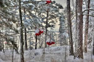 Kuva 17: Valkea joulu saatiin tänä vuonna myös etelään (kuva: Helsinki, Kulosaari).
