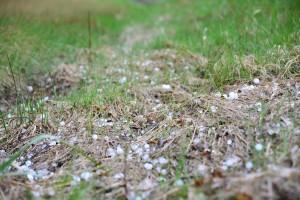Kuva 7: Toukokuun 19. päivä Liesjärvellä satoi melko kookkaita rakeita.