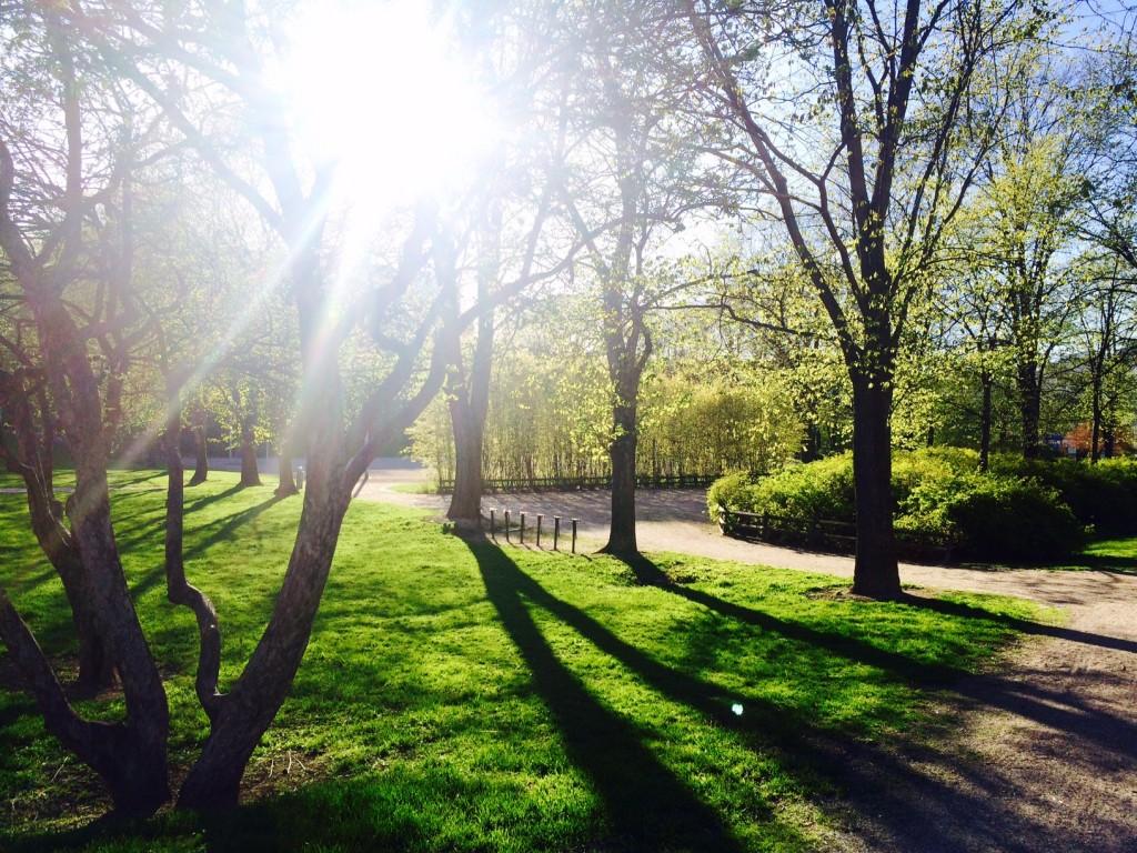 Violanpuisto alkaa vihertää Helsingin Hermannissa 19.5.2015.