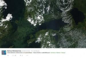 Kuva 4: Kumpuaminen, ravinnerikkaat valumavedet ja pohjan happikato voivat antaa siemenen pinnan sinileväkukinnoille. NASA:n satelliittikuva viime kesältä paljastaa karun totuuden. Tässä tapauksessa pitkä ja heikkotuulinen hellejakso käynnisti kukinnat.
