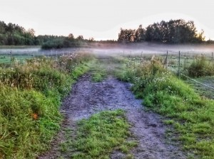 Kuva 3: Sumun muodostumista tyynenä ja selkeänä elokuisena iltana Keravalla (kuva: Markus Mäntykannas)