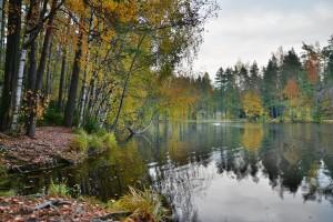Kuva 1: Ruskaa lokakuun alussa Espoon Myllylammella (kuva: Markus Mäntykannas)