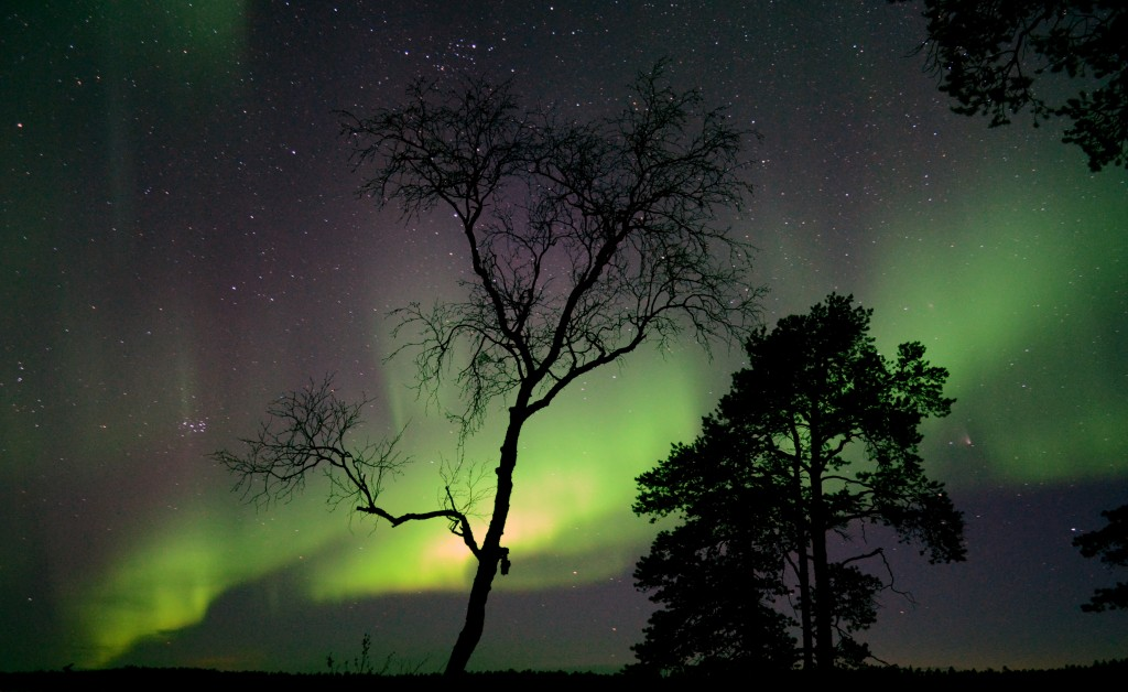 Vihreä on revontulten yleisin väri (Kuva: Steve-K / Flickr)
