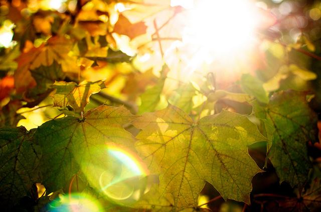 Syyslämpöä (kuva: Bark/Flickr)