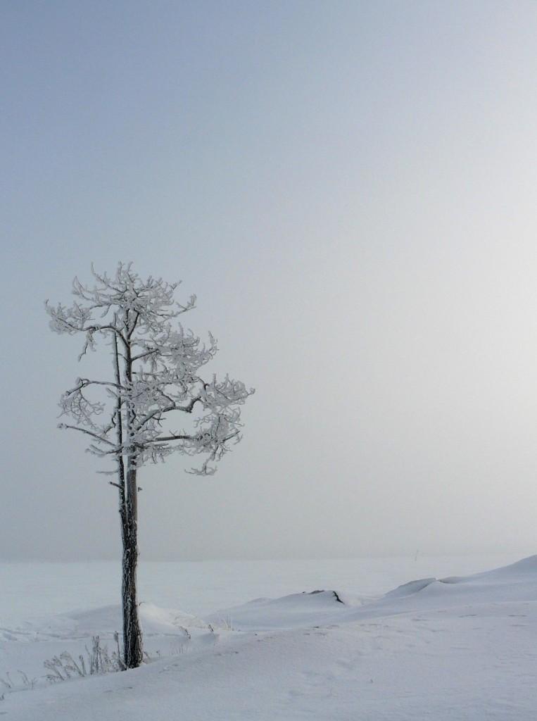 Sumu tiivistyy kuuraksi pitkän pakkasjakson viilentämille pinnoille (Kuva: Joanna Rinne)