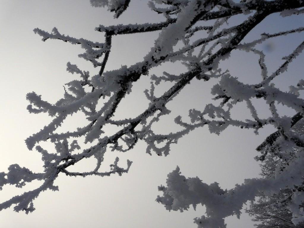 Sumun kestäessä useamman päivän kuuraa voi kertyä runsaastikin (Kuva: Joanna Rinne)