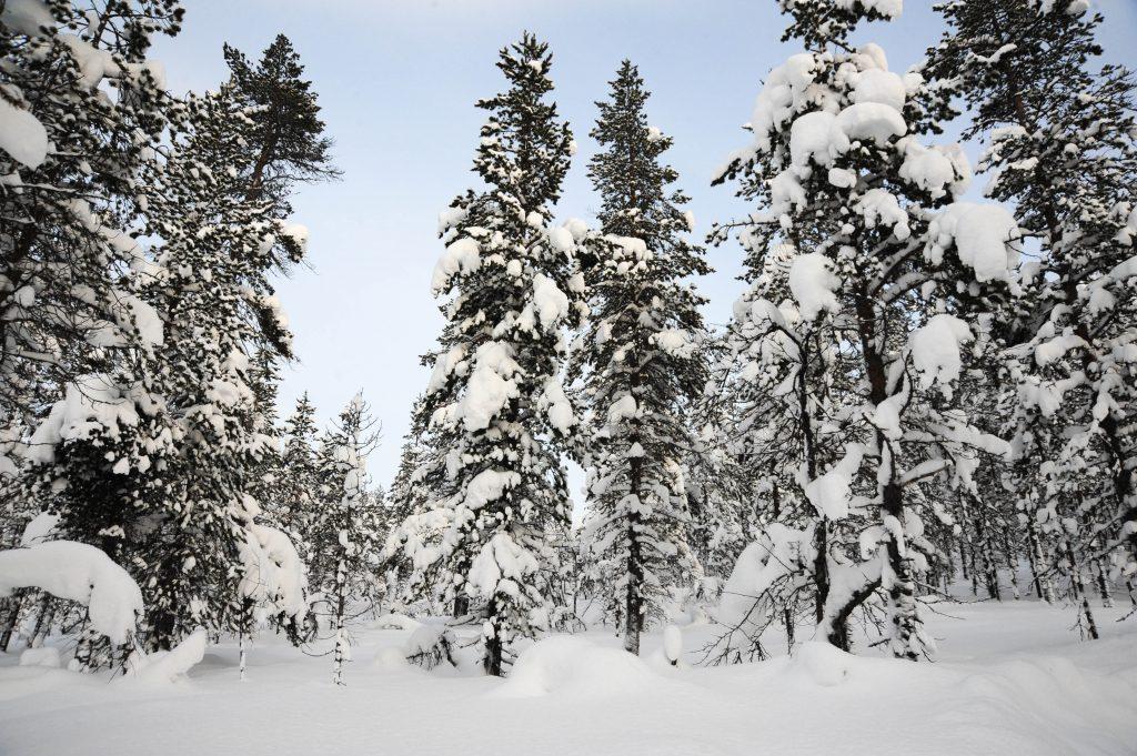 Lumipaljoutta UKK:n kansallispuistossa (Kuva: Joanna Rinne)