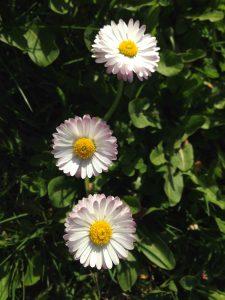 Kevät! (Kuva: Joanna Rinne)